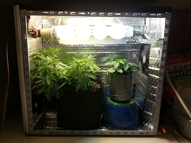 Растение каннабиса в системном блоке компьютера