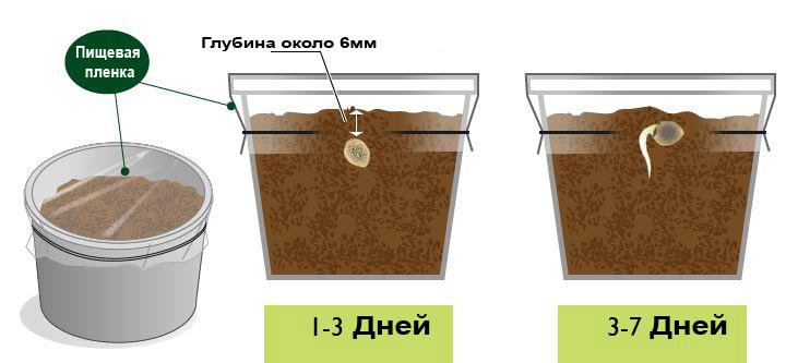 Как и когда сажать семена конопли флеш игры про коноплю