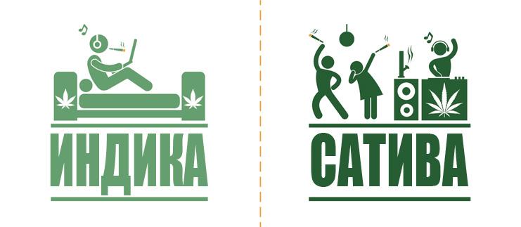 Разница в эффектах основных видов марихуаны