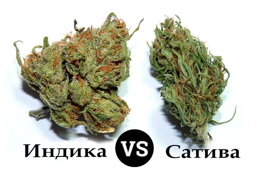 Разница видов марихуаны - индики и сативы