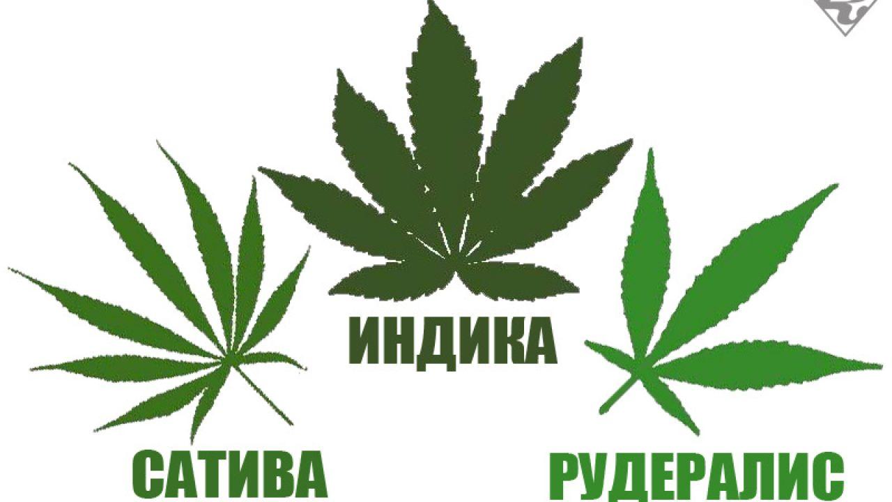 Разновидности сортов марихуаны содержание белка в конопле