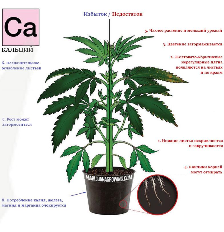 Дефицит и избыток кальция в марихуане