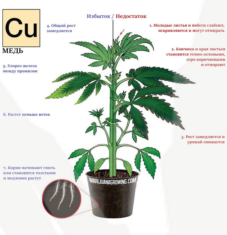 Дефицит и избыток меди в марихуане