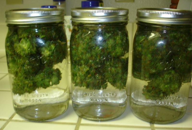 Конопля пролечка марихуана как лекарство помогает от