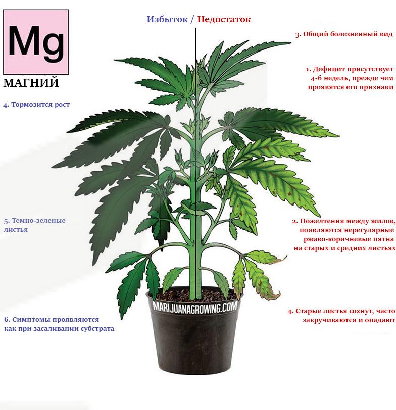 Дефицит и избыток магния в марихуане