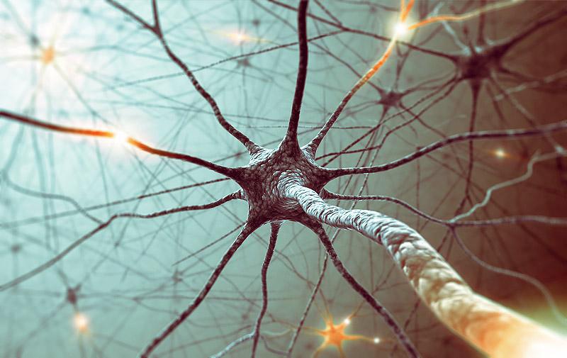 Активные компоненты каннабиса способны восстанавливать нервные клетки.
