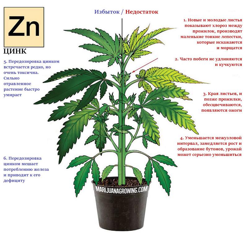 Дефицит и избыток цинка в марихуане