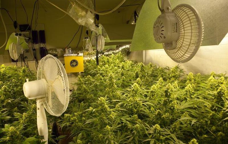 Выращивание марихуаны. Вентиляция гроубокса