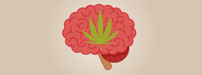 Воздействие марихуаны на память. Фото: Beatriz Gascon J/Shutterstock