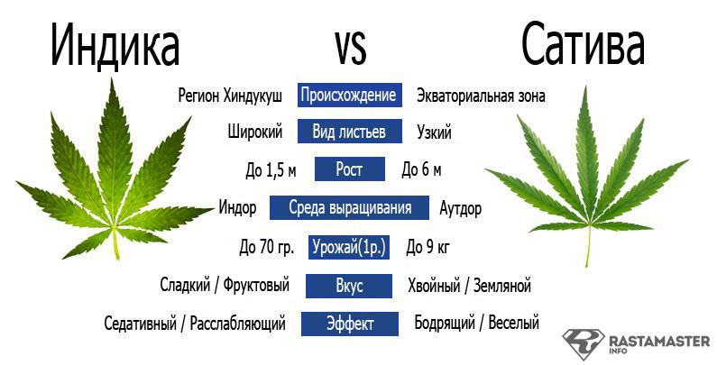 где купить семена конопли украина