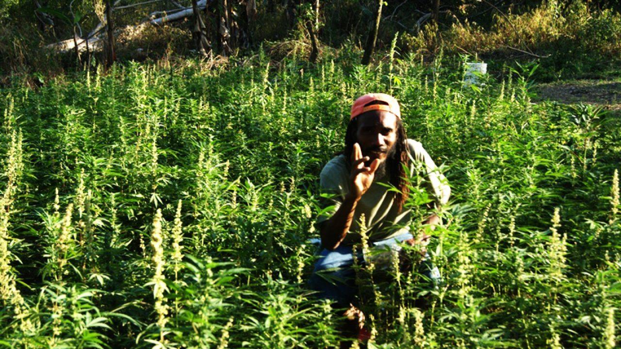 Посадить осенью конопли марихуана в сиде