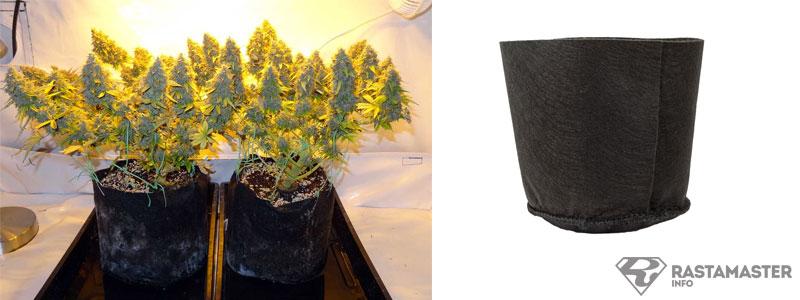 Марихуана размер горшка смолы марихуаны курить