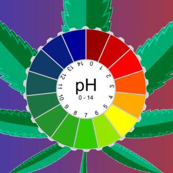 title_pH_rastamaster.info