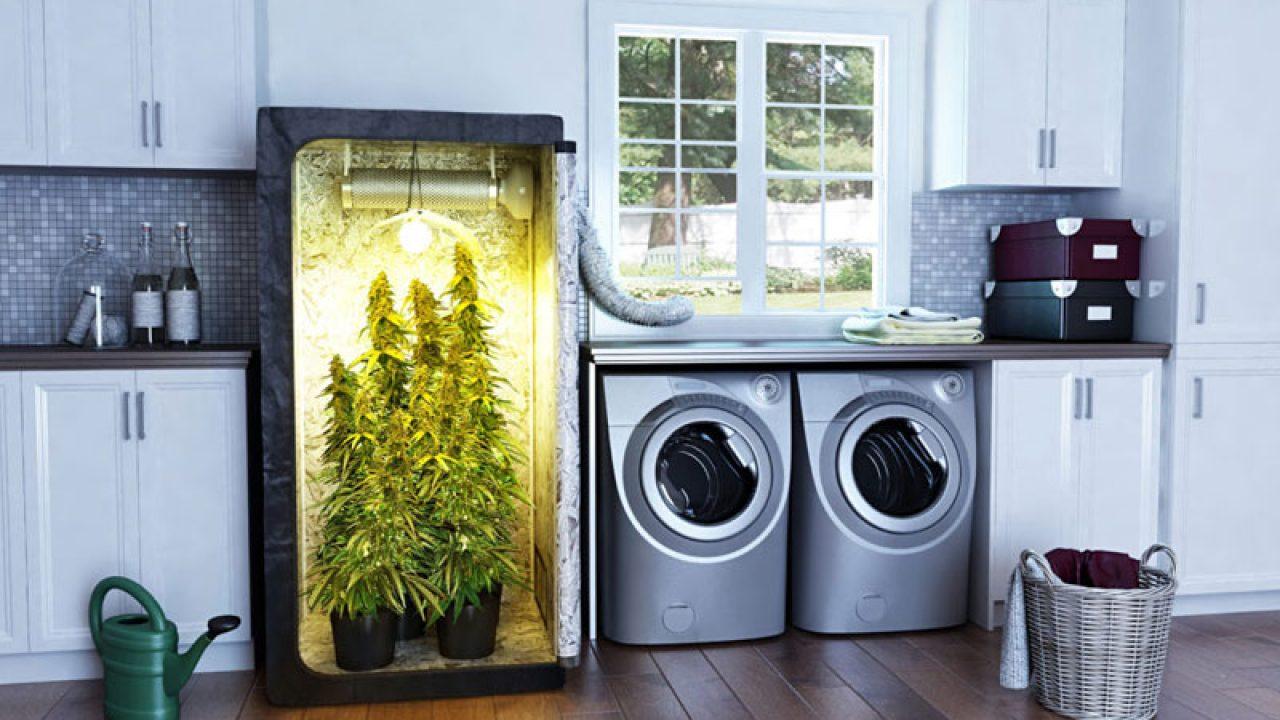 Гидропонный шкаф для конопли марихуана пыли