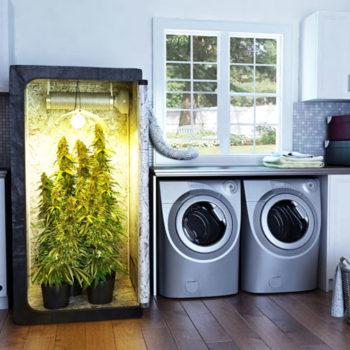 Выбор гроубокса для выращивания марихуаны в помещении
