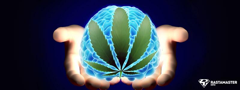 Отмирает ли мозг от марихуаны употребление марихуаны польза
