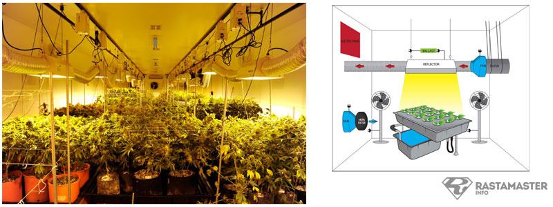 Палатка для выращивания марихуаны сорт конопли в сибири