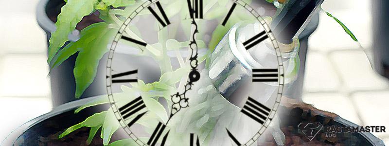 Время поливать марихуану