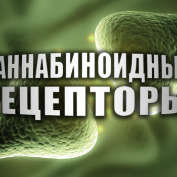 Каннабиноидные рецепторы