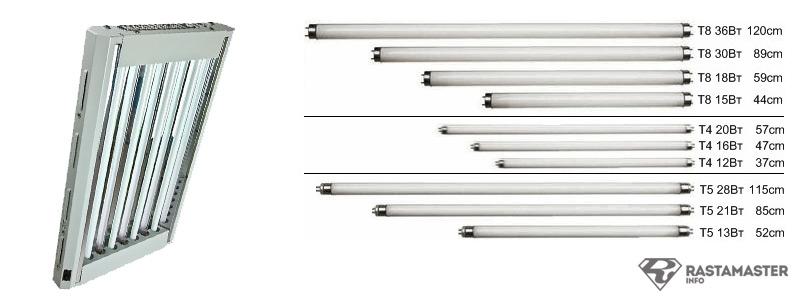 Лампы Т5 для выращивания дают холодный и достаточно интенсивный свет