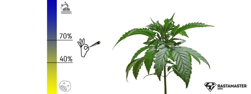 Идеальная влажность для стадии роста марихуаны 40-70%