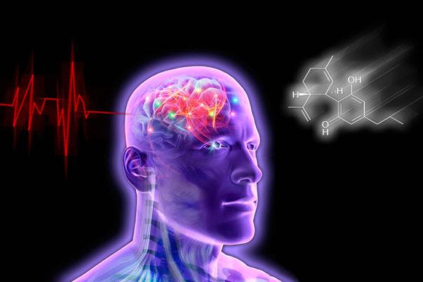 Каннабидиварин (КБДВ) и эпилепсия