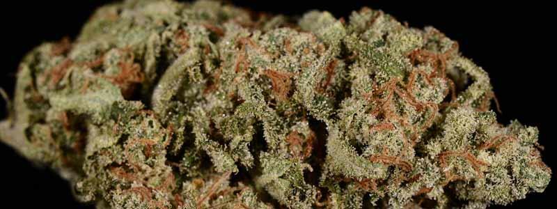 Как измельчить шишки марихуаны детоксикация организма марихуана