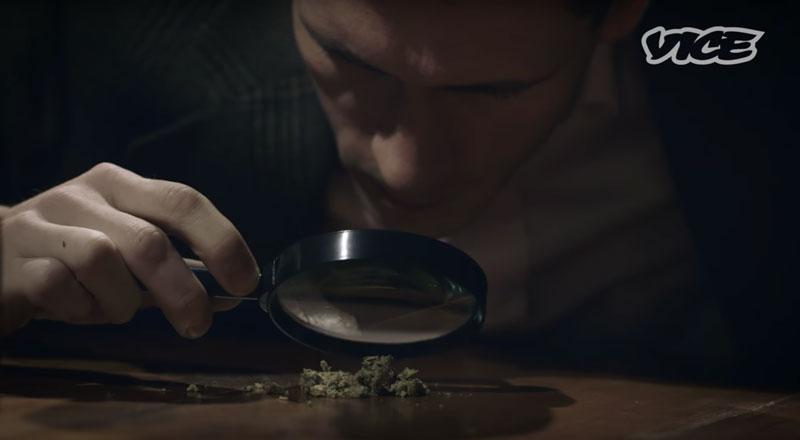 Расс Хадсон изучает соцветия марихуаны