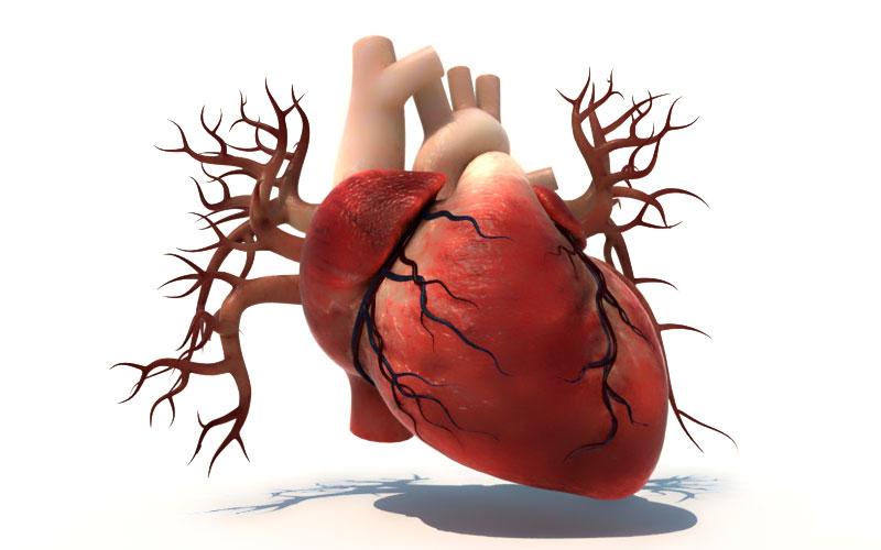 Влияние конопли сердце семя конопли в онкологии