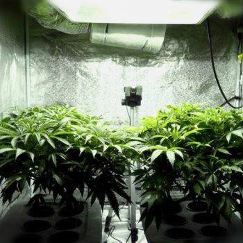 Выращивание марихуаны в гроубоксе