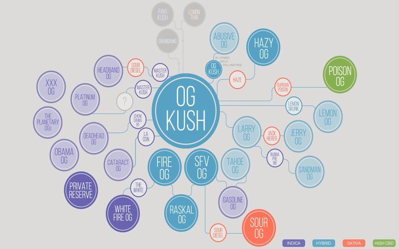 OG Kush генетическое дерево
