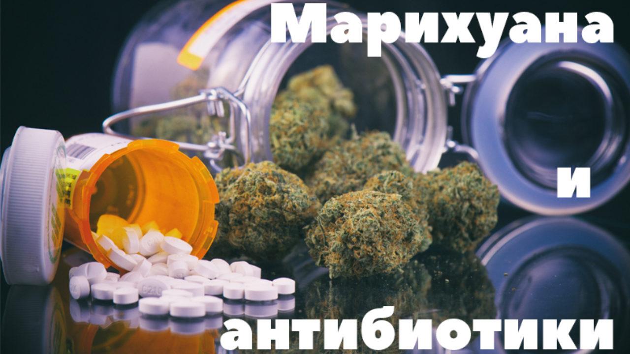 Антибиотики марихуаной коноплю выращивают в