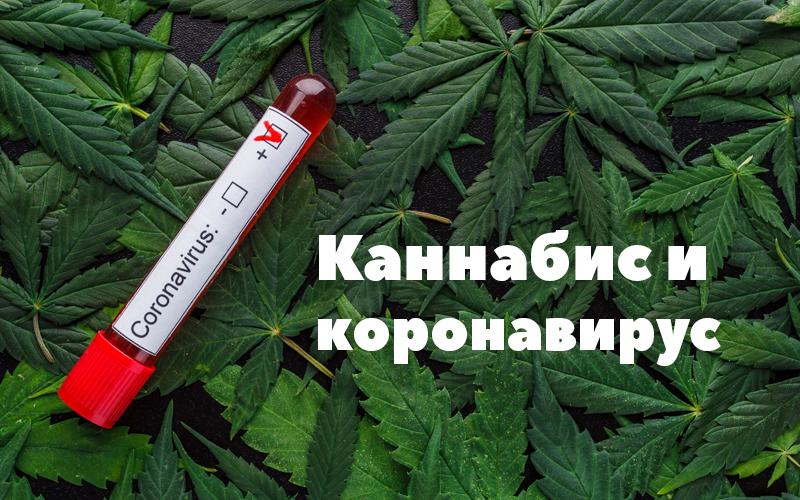 Covid_cannabis_main