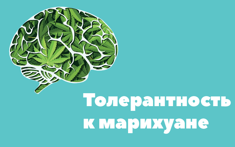 marijuana_tolarance