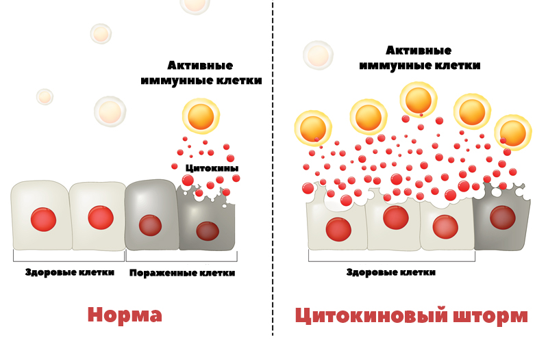 Схема действия цитокинового шторма