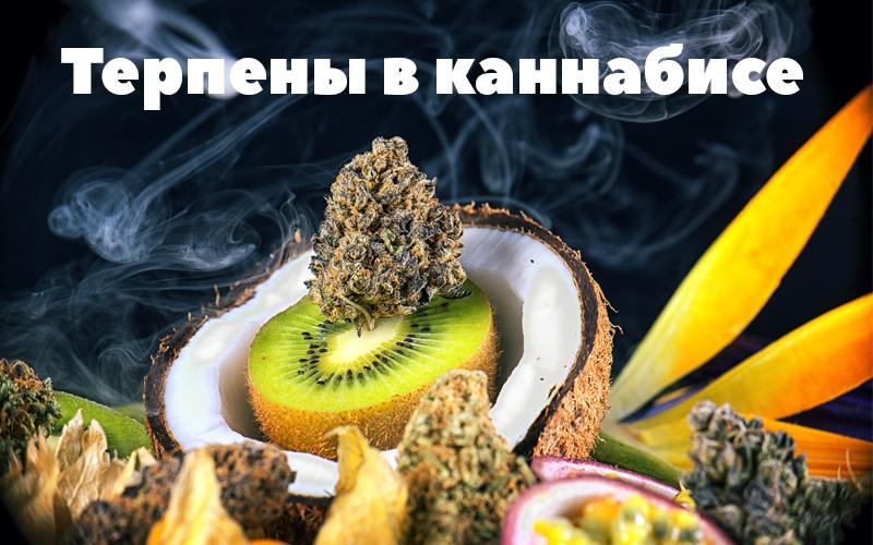 Терпены в марихуане